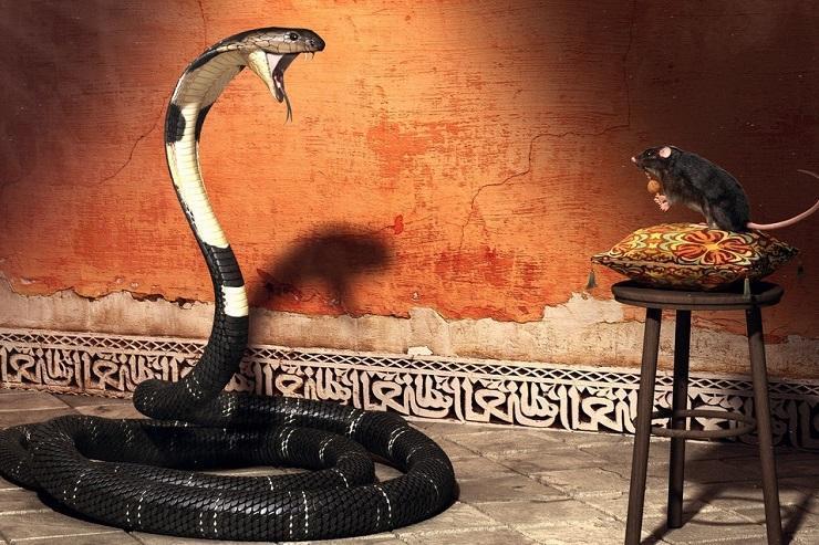 Советник Cobra: прибыль и опасность